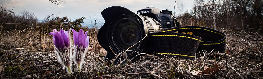 """honing-your-""""fieldcraft"""":-10-tips-to-approaching-wildlife-with-a-camera"""