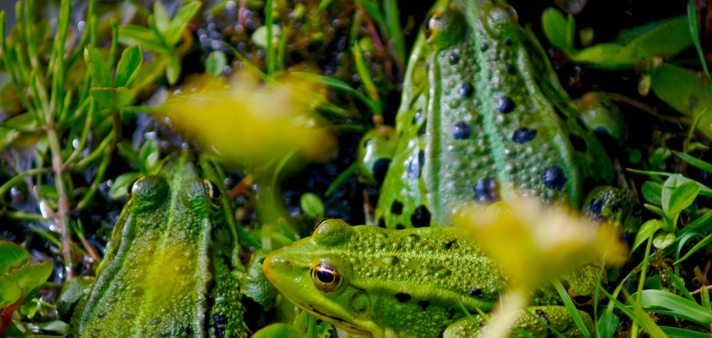 will-2021-be-a-turnaround-year-for-biodiversity?-canada-needs-a-new-comprehensive-strategy