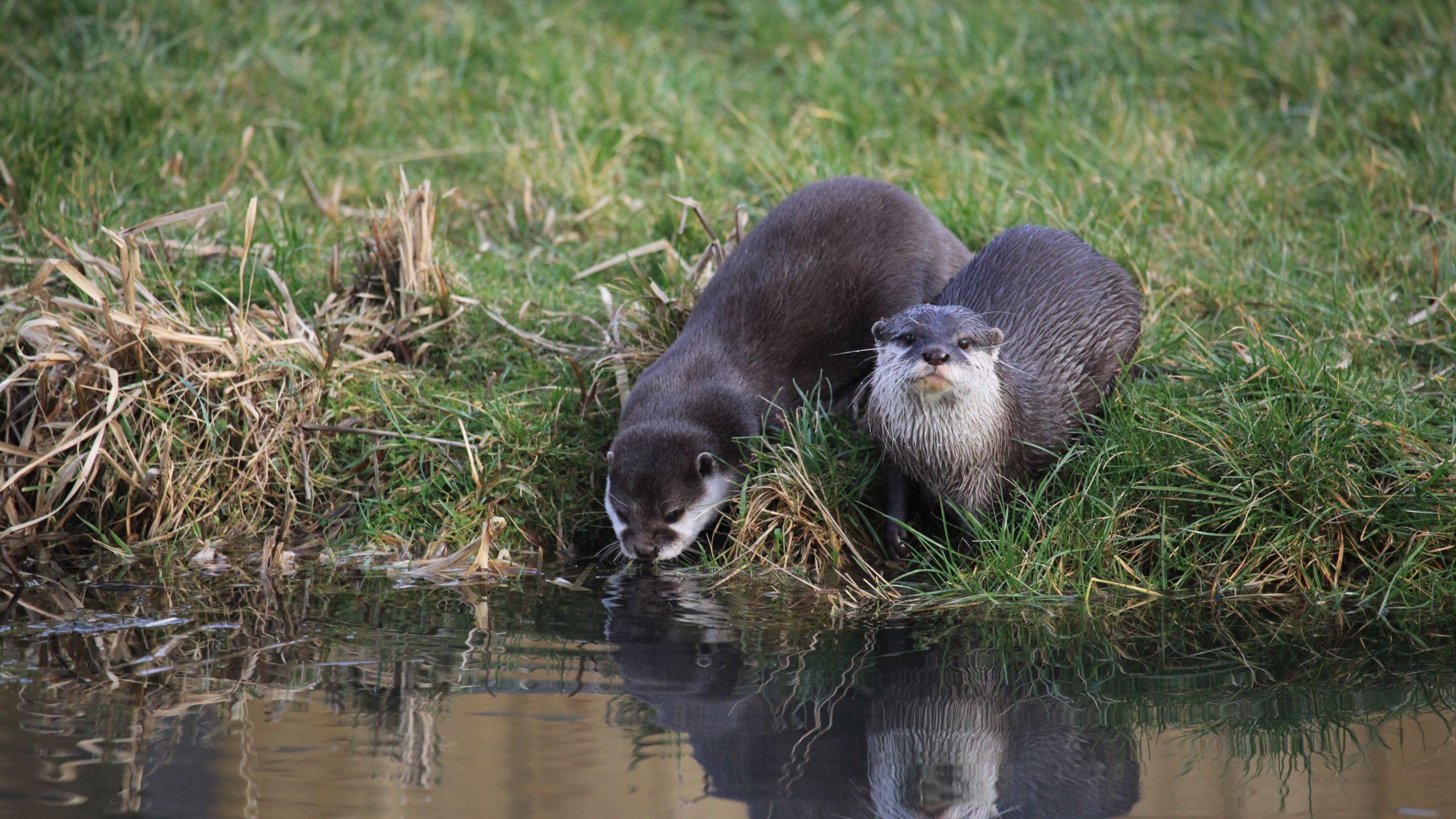 otter-fact-sheet