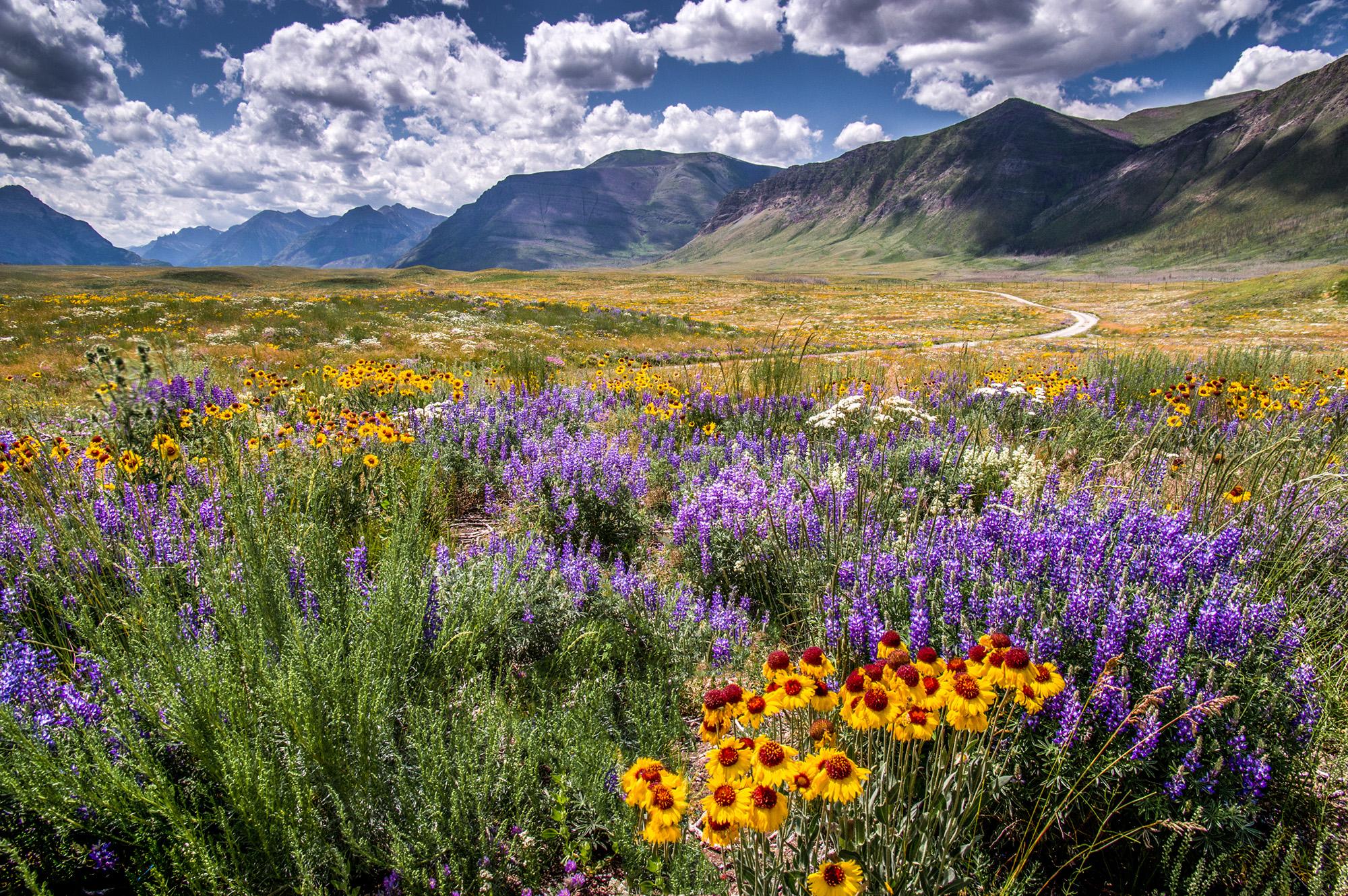 welcome-to-wildflower-wonderland