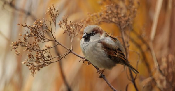 weekly-photography-assignment:-birds