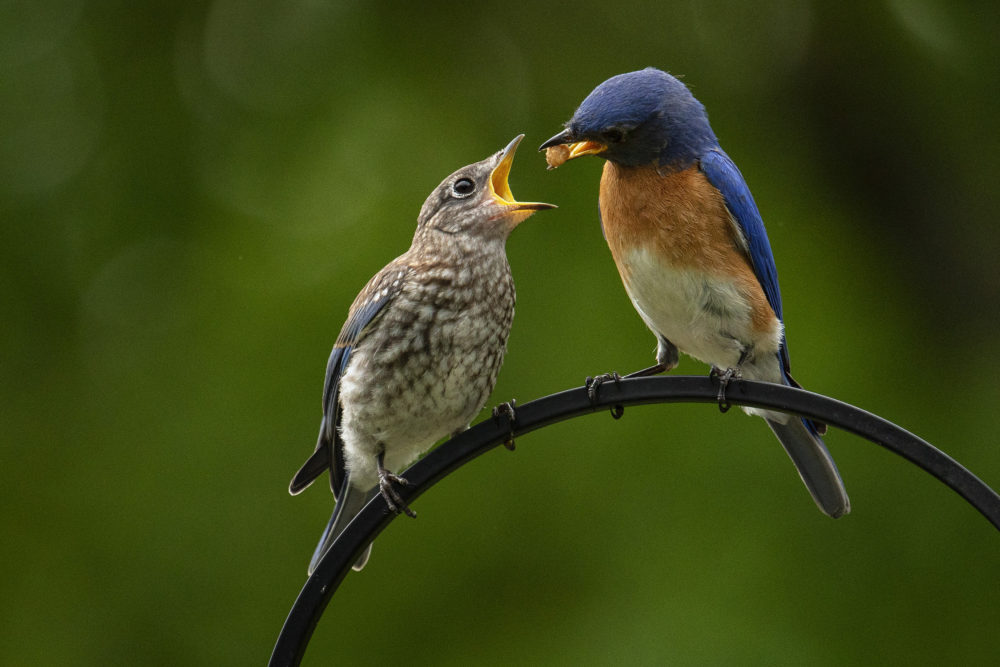 bird-photography-with-tamron's-150-500-ultra-telephoto-zoom-lens