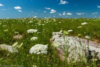 southwest-mn-prairies