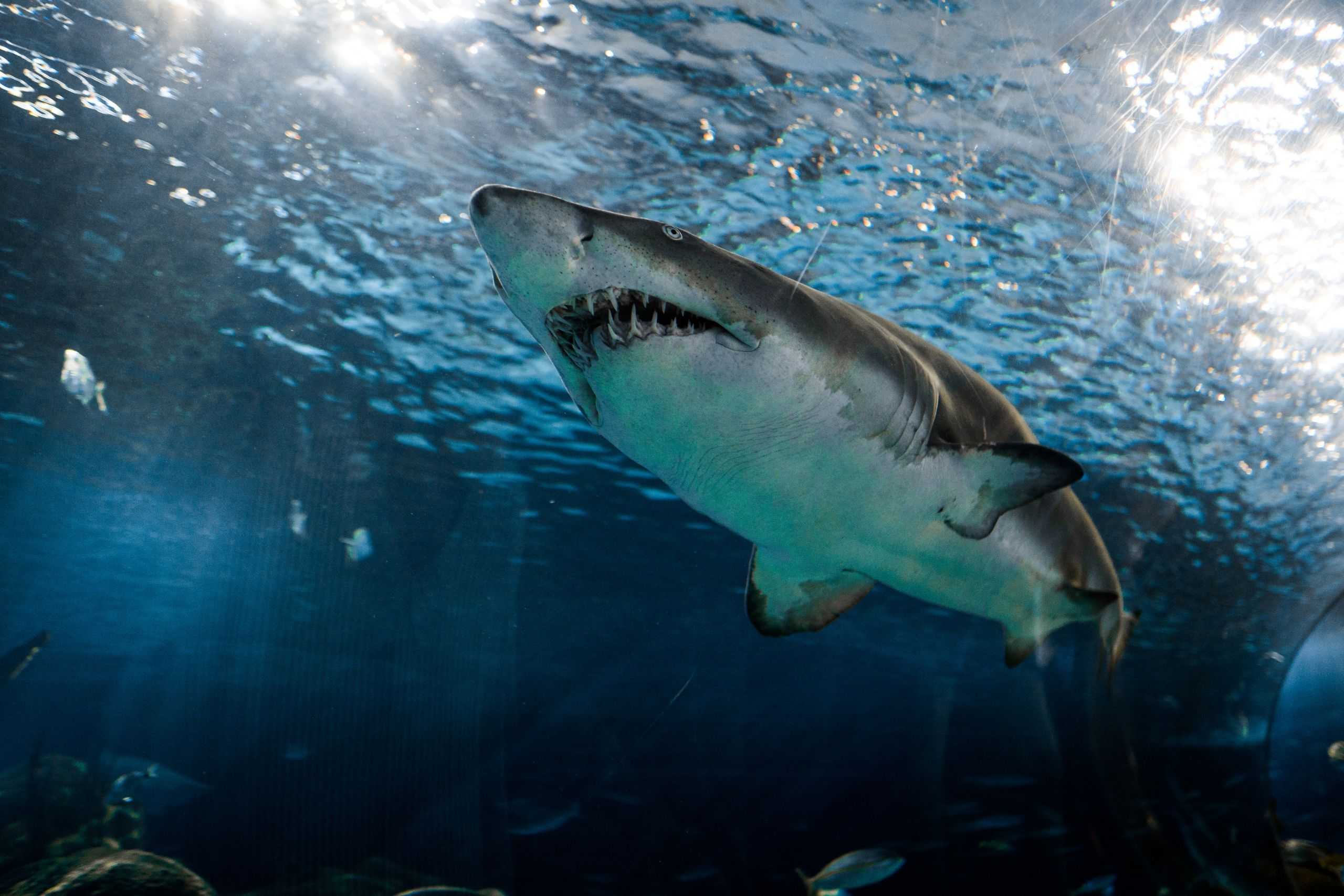 """""""shark-week""""-and-shifting-the-discussion-from-exploitation-to-conservation"""