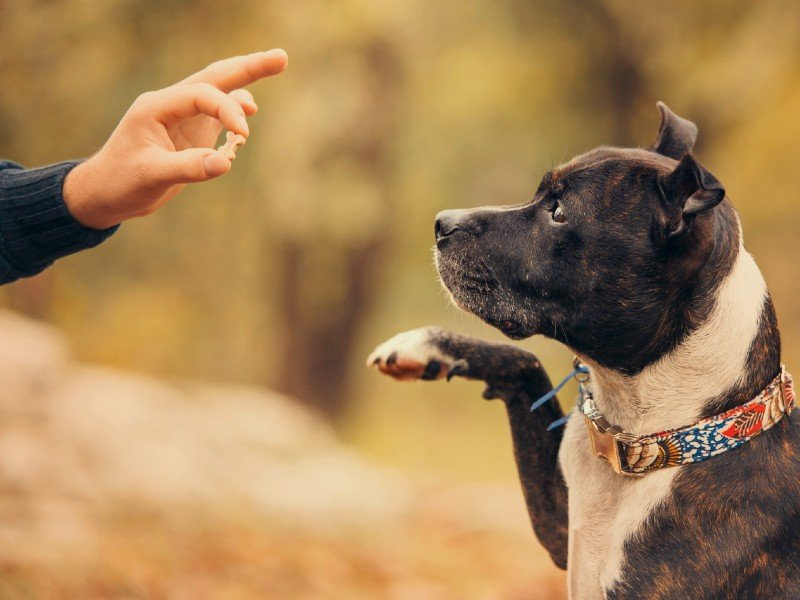 dog-training:-the-ultimate-guide