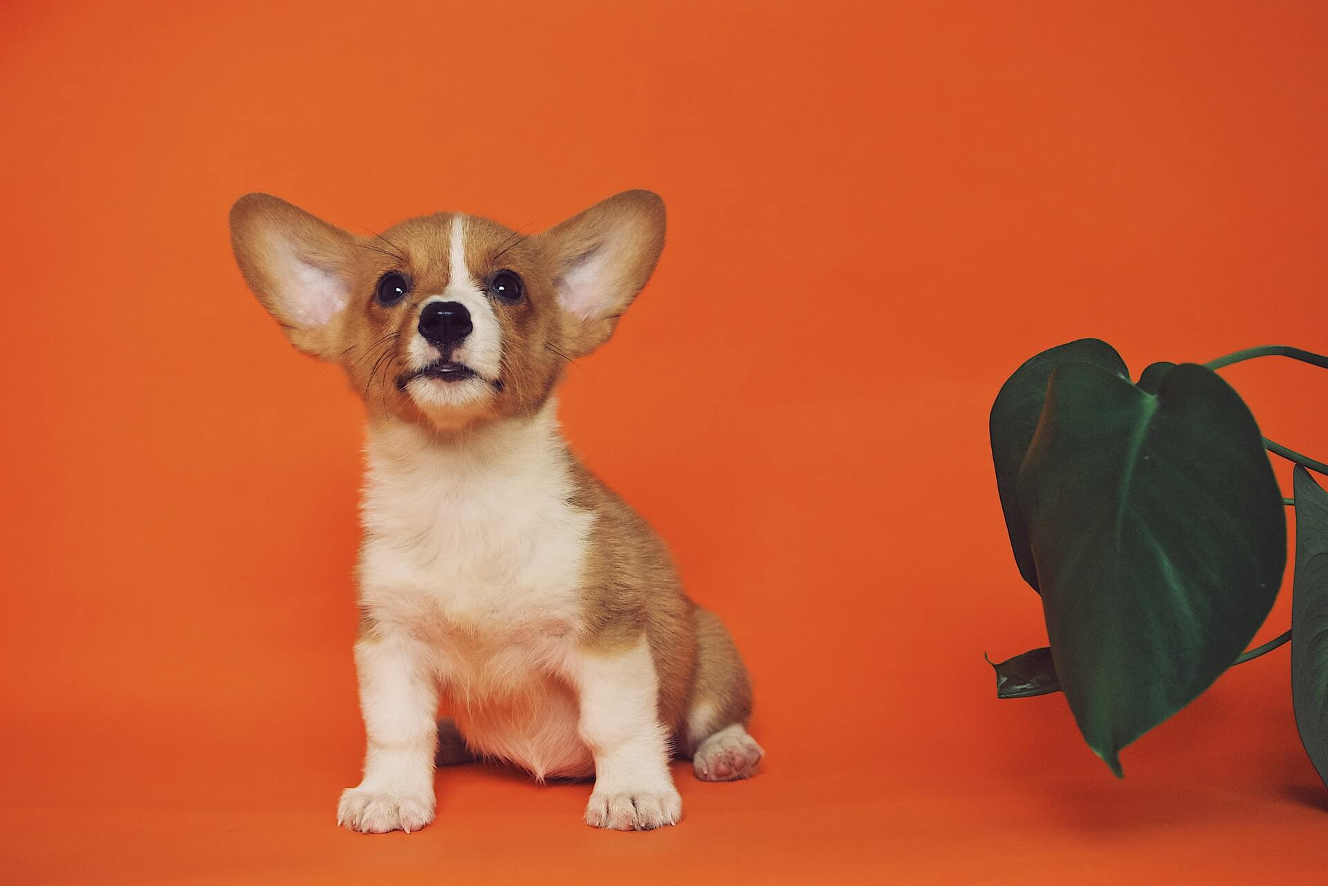 puppy-development-from-8-to-12-weeks
