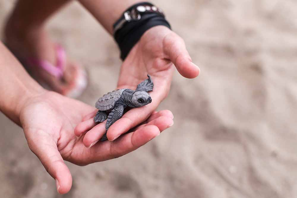 it's-turtle-nesting-season:-what-you-can-do-to-help