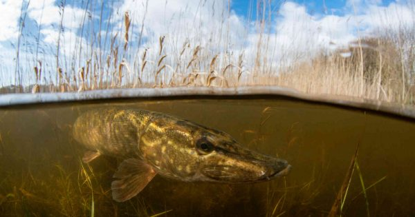 how-to-photograph-freshwater-fish-in-the-uk