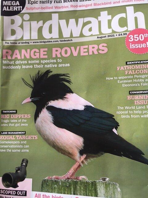 birdwatch-august-2021