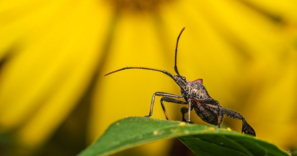 how-to-use-foregrounds-&-backgrounds-in-macro-photography