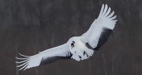 5-best-wildlife-photography-locations-in-japan