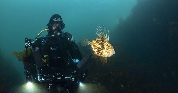 6-mistakes-to-avoid-when-taking-underwater-photos