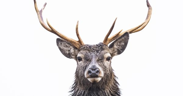 how-to-photograph-red-deer